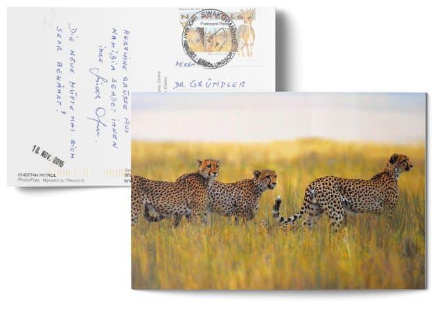 Testimonial über die erfolgreiche Behandlung durch Dr. Johannes Gründler - Postkarte mit einem Bild von 3 Leoparden in Namibia